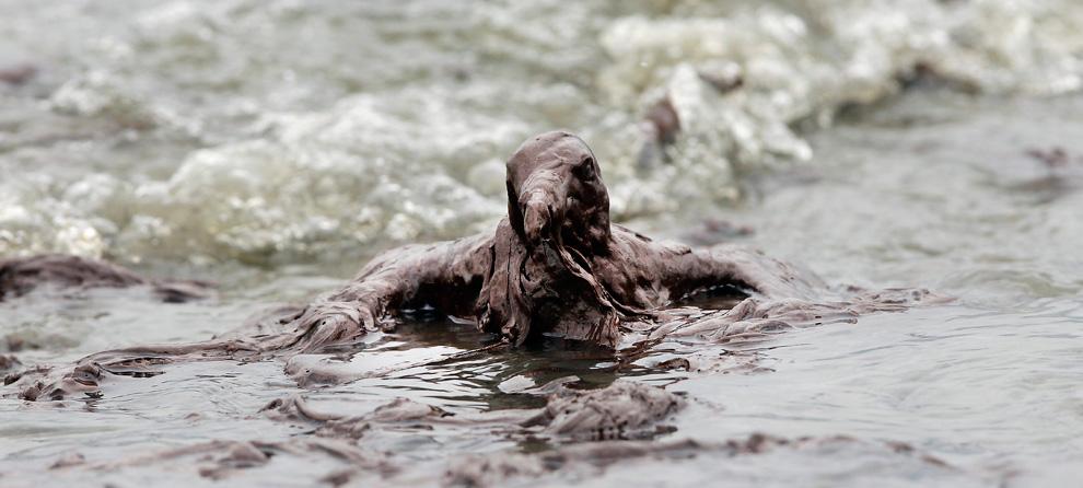 Richtig vom Öl durchtränkt ist dieser nur schwer zu erkennende Seevogel am Stand der East Grand Terre Island in Louisiana. Aufnahmedatum: Dienstag, 03. Juni 2010. (AP Foto/Charlie Riedel)