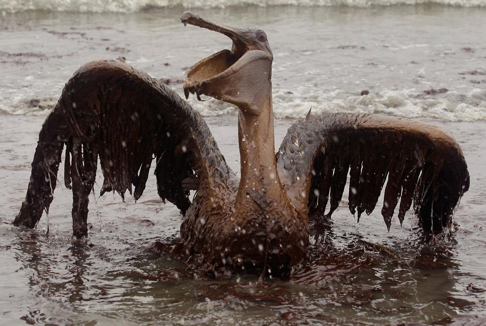 Ein von Öl verklebter Pelikan sitzt am Stand der East Grand Terre Island in Louisiana. Aufnahmedatum: Dienstag, 03. Juni 2010. (AP Foto/Charlie Riedel)