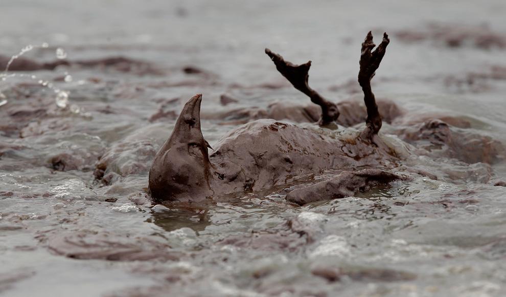 Qualvoll verendeter Vogel im schleimigen Ölschlamm am Stand der East Grand Terre Island in Louisiana. Aufnahmedatum: Dienstag, 03. Juni 2010. (AP Foto/Charlie Riedel)
