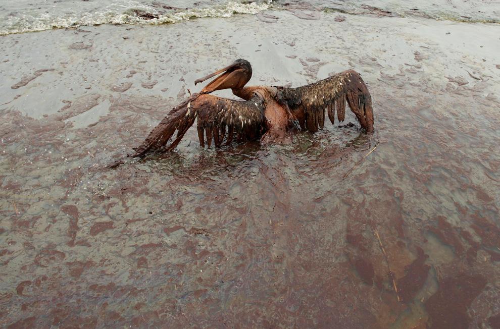 Bewegung macht alles nur noch schlimmer: Ein Pelikan am Stand der East Grand Terre Island in Louisiana. Aufnahmedatum: Dienstag, 03. Juni 2010. (AP Foto/Charlie Riedel)
