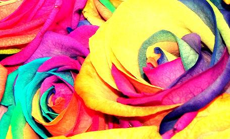 Schmetterlingstage: Feel The Love ♥