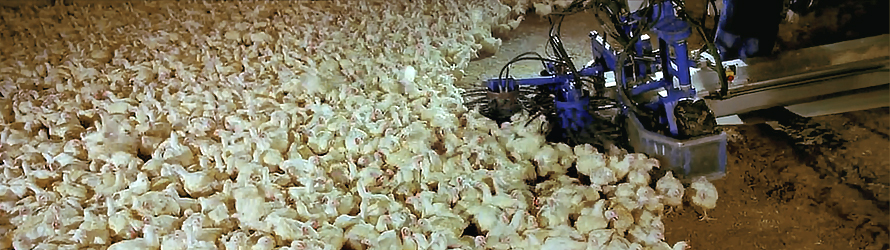 Überkonsum: Tiermast für Menschmast
